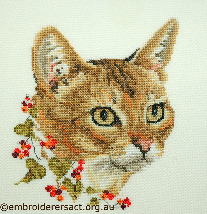 Abyssinian Cat x-stitched by Barbara Adams