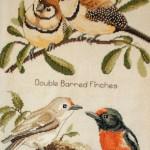 Detail Australian Birds X-stitch