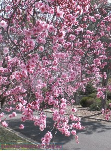 photo of spring blossom