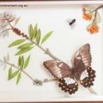 Stumpwork of Butterfly & Banksia