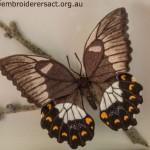 Detail of Stumpwork Butterfly