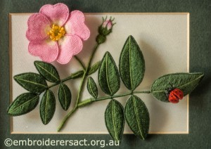 Pink Dog Rose with Ladybug by Lorna Loveland