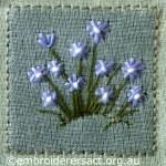 Blue Starry Flowers