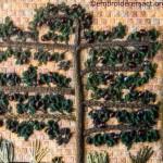 Stitchery of espaliered plum tree